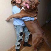 Собаки могут впечатлить не только своей преданностью и умом